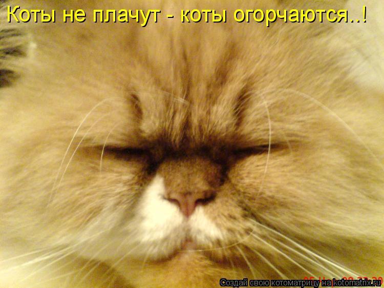 Котоматрица: Коты не плачут - коты огорчаются..!