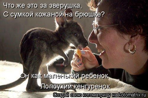 Котоматрица: Что же это за зверушка, С сумкой кожаной на брюшке? Он как маленький ребенок Лопоухий кенгуренок