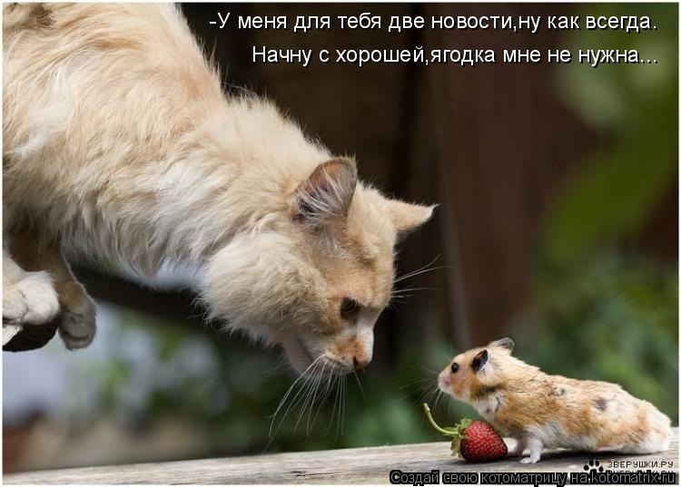 Котоматрица: -У меня для тебя две новости,ну как всегда. Начну с хорошей,ягодка мне не нужна...