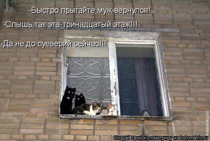 Котоматрица: -Быстро прыгайте,муж вернулся! -Да не до суеверий сейчас!!! -Слышь,так эта-тринадцатый этаж!!!