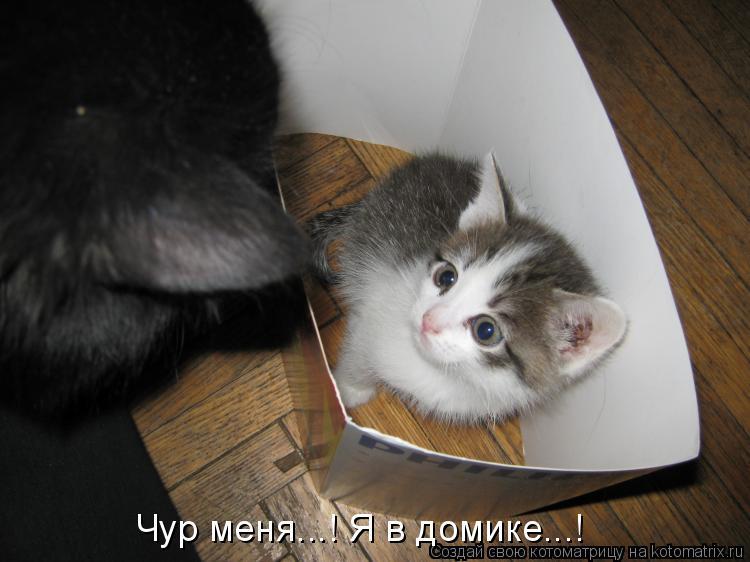 Котоматрица: Чур меня...! Я в домике...!