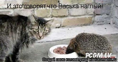 Котоматрица: И это говорят,что Васька наглый!