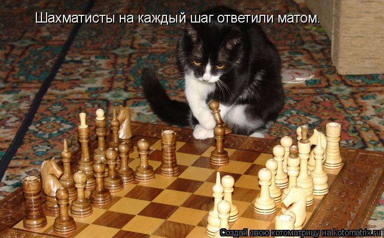Котоматрица: Шахматисты на каждый шаг ответили матом.