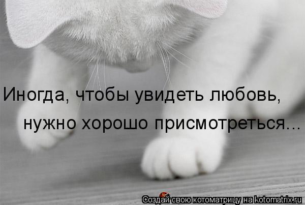 Котоматрица: Иногда, чтобы увидеть любовь,  нужно хорошо присмотреться...