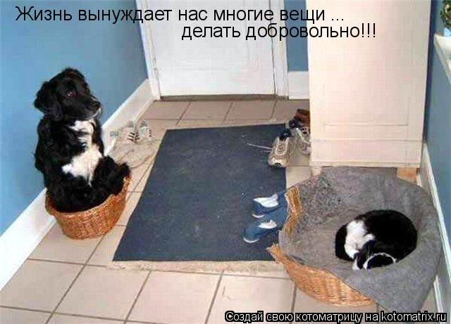 Котоматрица: Жизнь вынуждает нас многие вещи ... делать добровольно!!!