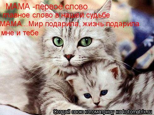 Котоматрица: МАМА -первое слово главное слово в нашей судьбе МАМА...Мир подарила, жизнь подарила мне и тебе