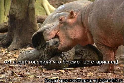 Котоматрица: ой! а ещё говорили что бегемот вегетарианец!