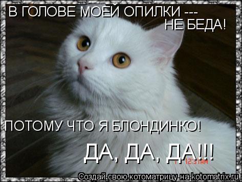 Котоматрица: В ГОЛОВЕ МОЕЙ ОПИЛКИ ---  НЕ БЕДА!  ПОТОМУ ЧТО Я БЛОНДИНКО! ДА, ДА, ДА!!!