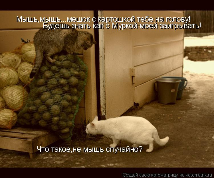 Котоматрица: Что такое,не мышь случайно? Мышь,мышь...мешок с картошкой тебе на голову! Будешь знать как с Муркой моей заигрывать!