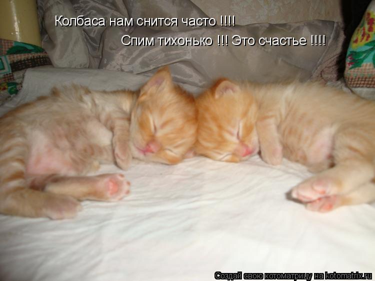 Котоматрица: Колбаса нам снится часто !!!! Спим тихонько !!! Это счастье !!!!