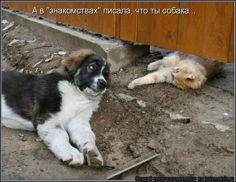 """Котоматрица: А в """"знакомствах"""" писала, что ты собака..."""