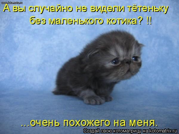 Котоматрица: А вы случайно не видели тётеньку без маленького котика? !! ...очень похожего на меня.