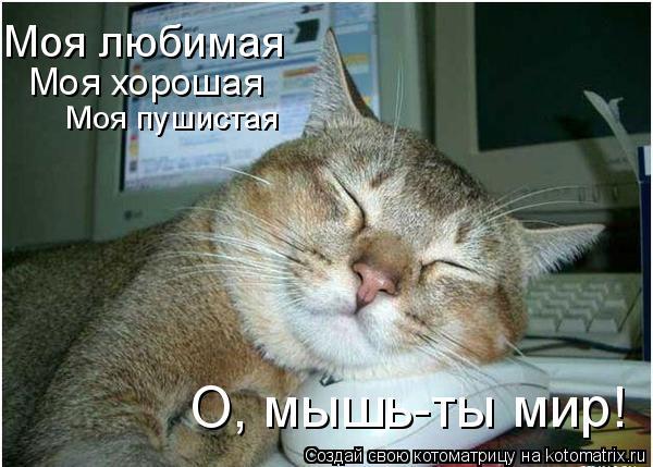 Котоматрица: Моя любимая Моя хорошая Моя пушистая О, мышь-ты мир!