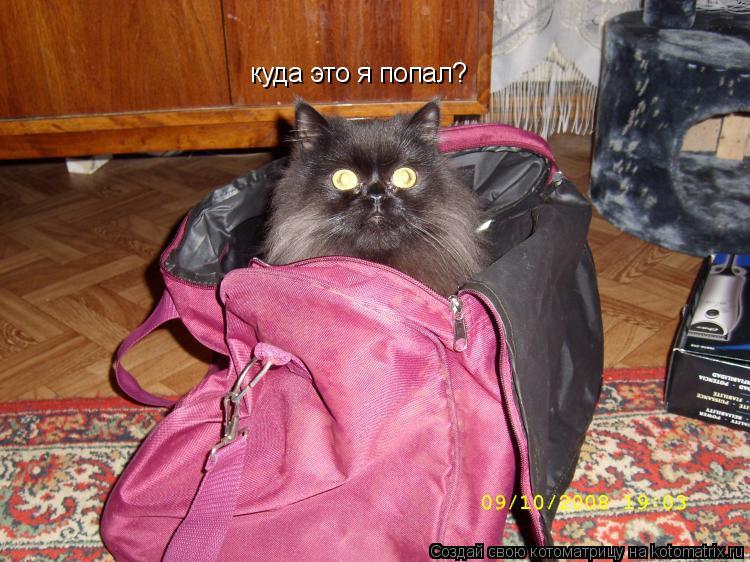 Котоматрица: куда это я попал?