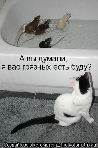 Котоматрица: А вы думали, я вас грязных есть буду?