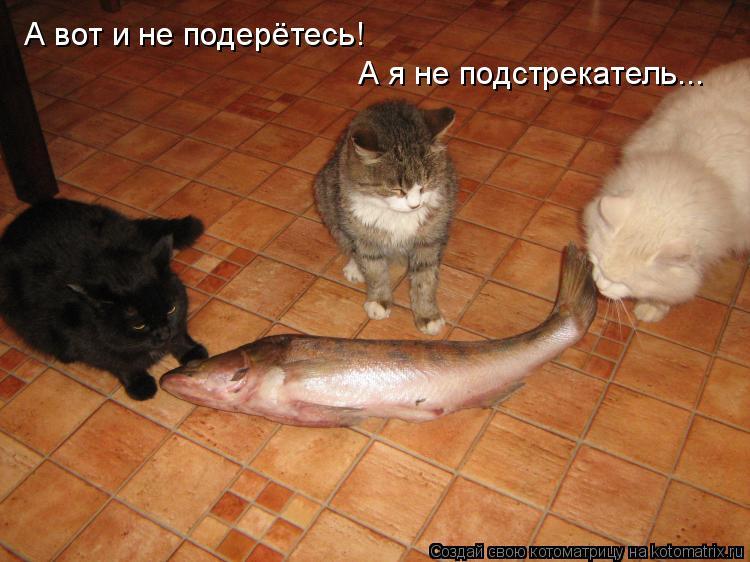 http://kotomatrix.ru/images/lolz/2009/01/10/vM.jpg
