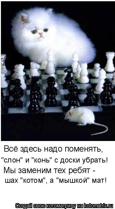 """Котоматрица: Всё здесь надо поменять, """"слон"""" и """"конь"""" с доски убрать! Мы заменим тех ребят - шах """"котом"""", а """"мышкой"""" мат!"""