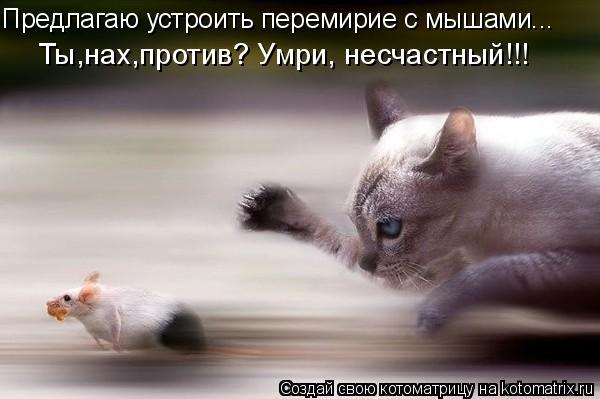 Котоматрица: Предлагаю устроить перемирие с мышами... Ты,нах,против? Умри, несчастный!!!