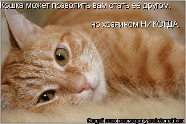 Котоматрица: Кошка может позволить вам стать её другом, но хозяином НИКОГДА.