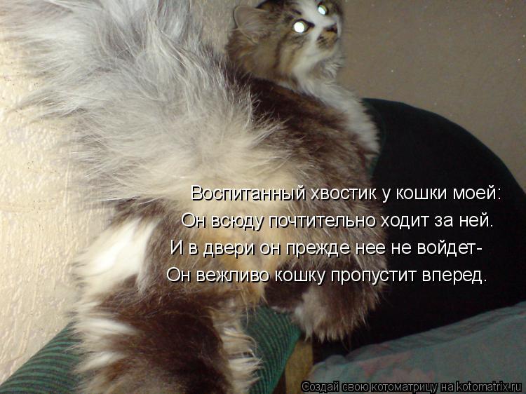 Котоматрица: Воспитанный хвостик у кошки моей: Он всюду почтительно ходит за ней. И в двери он прежде нее не войдет- Он вежливо кошку пропустит вперед.