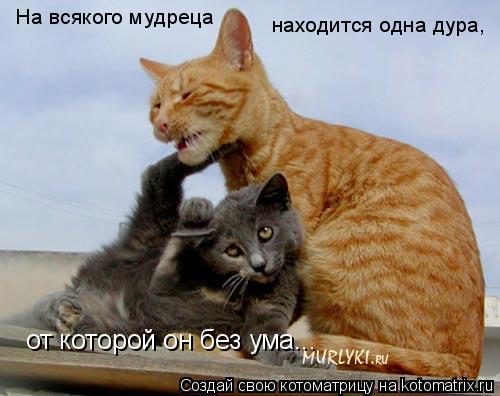 Котоматрица: На всякого мудреца находится одна дура,  от которой он без ума...