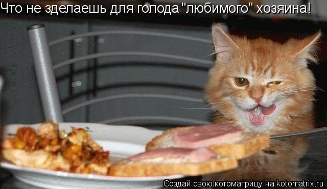 """Котоматрица: Что не зделаешь для голода  """"любимого"""" хозяина!"""