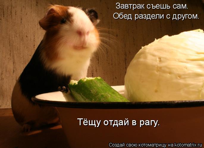 Котоматрица: Завтрак съешь сам. Обед раздели с другом. Тёщу отдай в рагу.