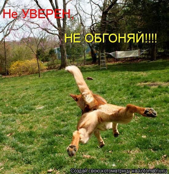 Котоматрица: Не УВЕРЕН, НЕ ОБГОНЯЙ!!!!