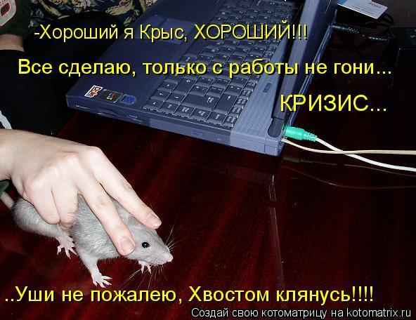Котоматрица: -Хороший я Крыс, ХОРОШИЙ!!! Все сделаю, только с работы не гони... КРИЗИС... ..Уши не пожалею, Хвостом клянусь!!!!