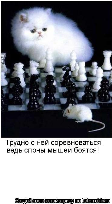 Котоматрица: Трудно с ней соревноваться, ведь слоны мышей боятся!