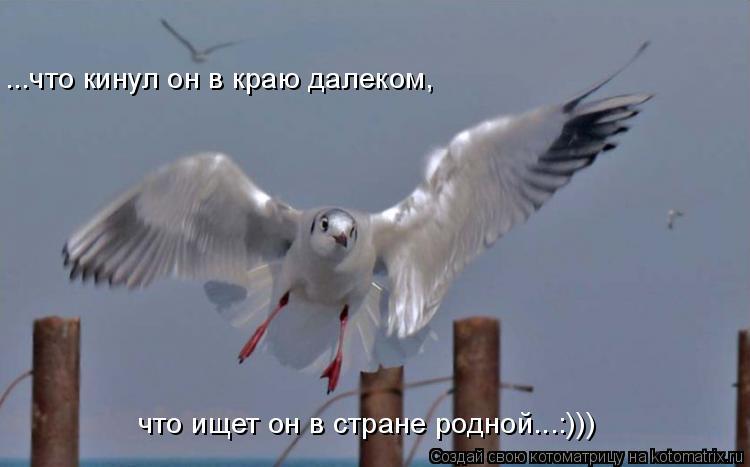 Котоматрица: что ищет он в стране родной...:))) ...что кинул он в краю далеком,