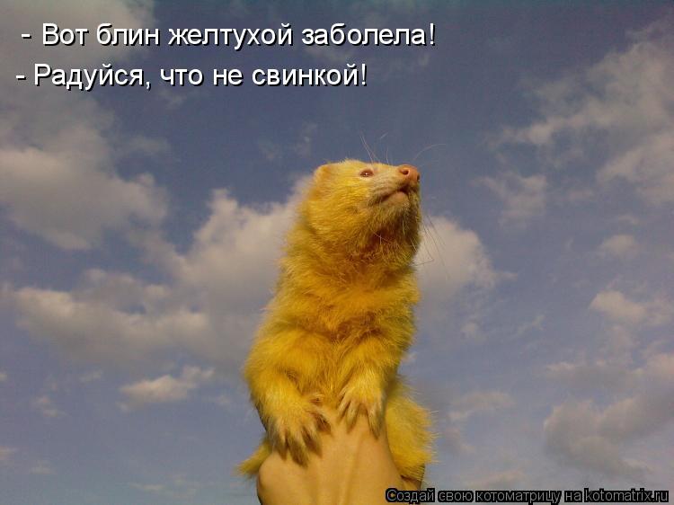 Котоматрица: Вот блин желтухой заболела! - - Радуйся, что не свинкой!