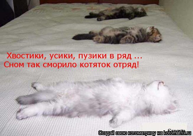 Котоматрица: Хвостики, усики, пузики в ряд ... Сном так сморило котяток отряд!