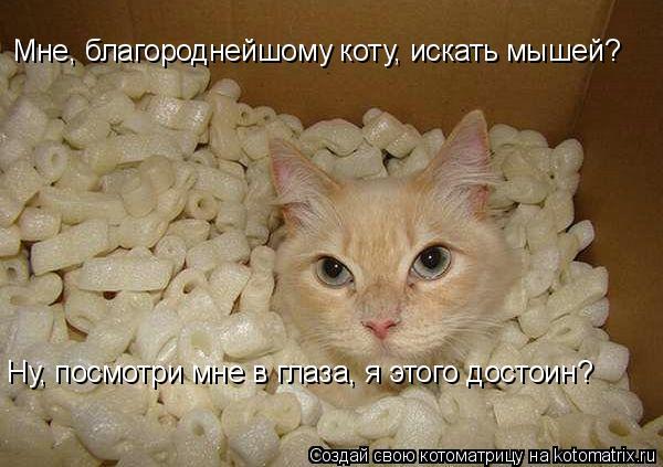 Котоматрица: Мне, благороднейшому коту, искать мышей? Ну, посмотри мне в глаза, я этого достоин?