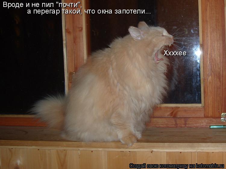 """Котоматрица: Вроде и не пил """"почти"""", а перегар такой, что окна запотели... Ххххее"""