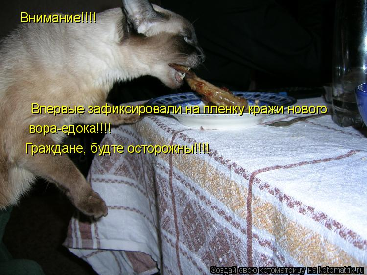 Котоматрица: Внимание!!!! Впервые зафиксировали на пленку кражи нового  вора-едока!!!! Граждане, будте осторожны!!!!