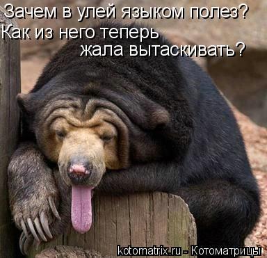 Котоматрица: Зачем в улей языком полез? Как из него теперь  жала вытаскивать?