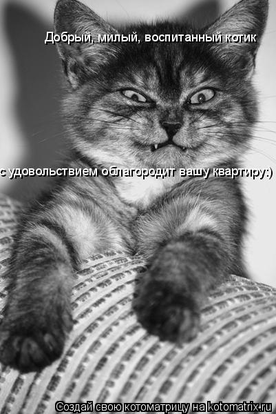 Котоматрица: Добрый, милый, воспитанный котик с удовольствием облагородит вашу квартиру:)