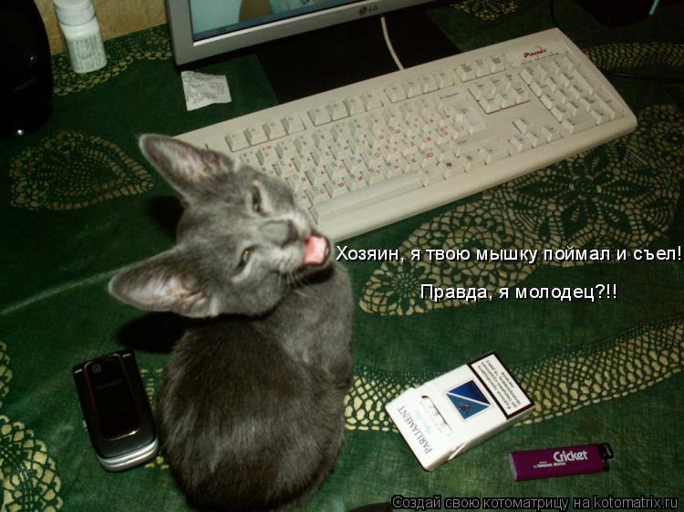 кошка перестала ловить мышей
