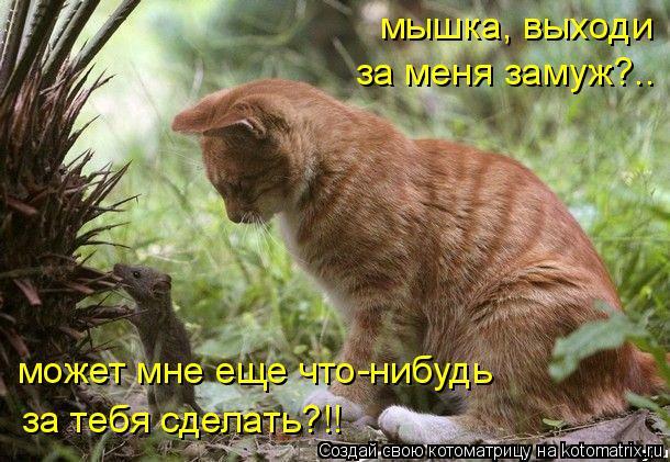 Котоматрица: мышка, выходи  может мне еще что-нибудь  за тебя сделать?!! за меня замуж?..