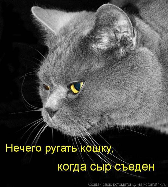 Котоматрица: Нечего ругать кошку,  когда сыр съеден