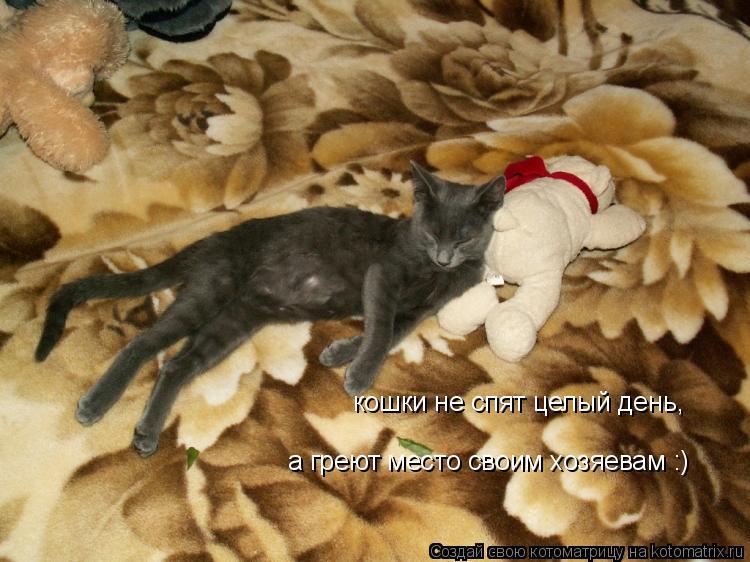 Котоматрица: кошки не спят целый день, а греют место своим хозяевам :)