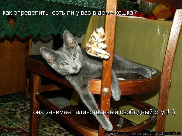 Котоматрица: как определить, есть ли у вас в доме кошка? она занимает единственный свободный стул! :)