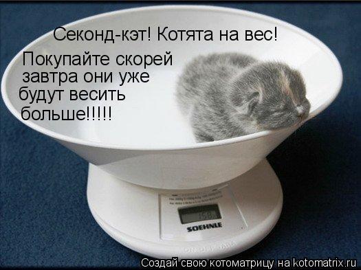 Котоматрица: Секонд-кэт! Котята на вес!  Покупайте скорей завтра они уже  будут весить больше!!!!!
