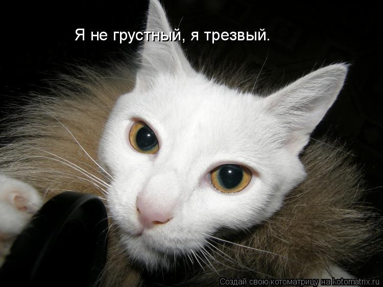 Котоматрица: Я не грустный, я трезвый.