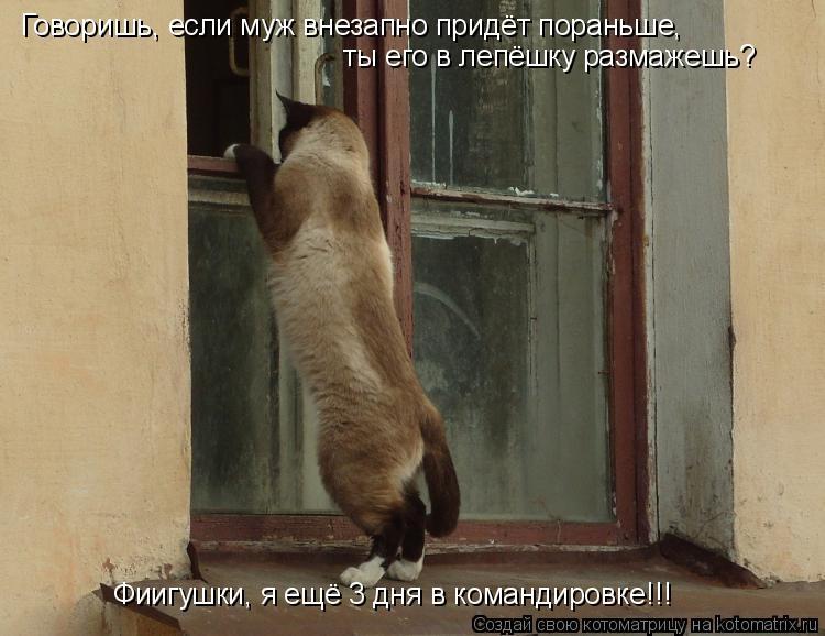 Котоматрица: Говоришь, если муж внезапно придёт пораньше, ты его в лепёшку размажешь? Фиигушки, я ещё 3 дня в командировке!!!