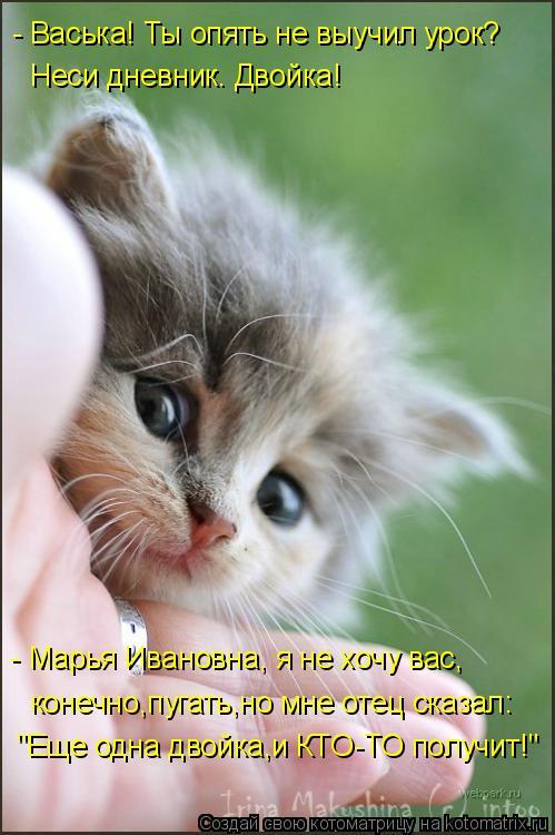 """Котоматрица: """"Еще одна двойка,и КТО-ТО получит!"""" конечно,пугать,но мне отец сказал: - Марья Ивановна, я не хочу вас,  Неси дневник. Двойка! - Васька! Ты опять н"""