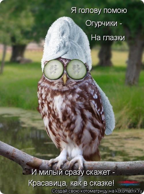 Прихорашивающаяся сова.