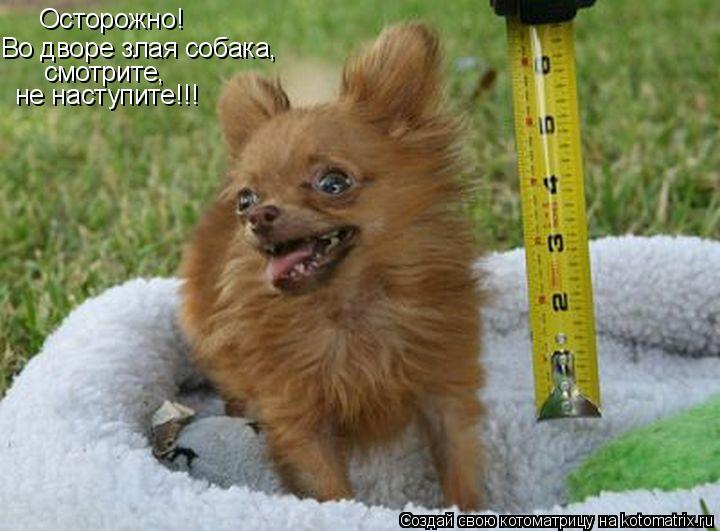 Котоматрица: Во дворе злая собака,  Осторожно! смотрите,  не наступите!!!