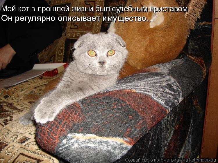Котоматрица: Мой кот в прошлой жизни был судебным приставом.  Он регулярно описывает имущество...